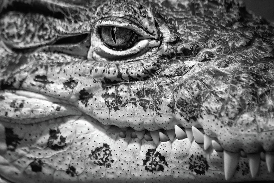 Zoo Photograph - Creepy Crawler by James Woody
