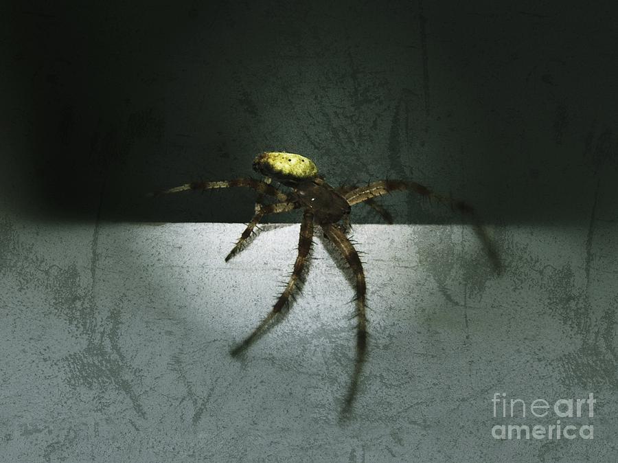 Spider Photograph - Creepy Spider by Christy Bruna
