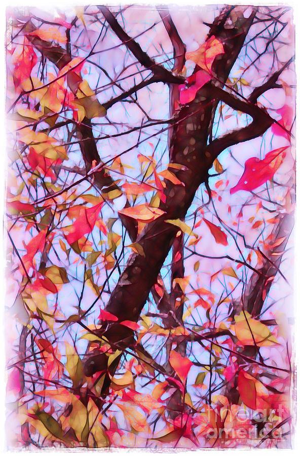 Fall Photograph - Crisp Autumn Day by Judi Bagwell