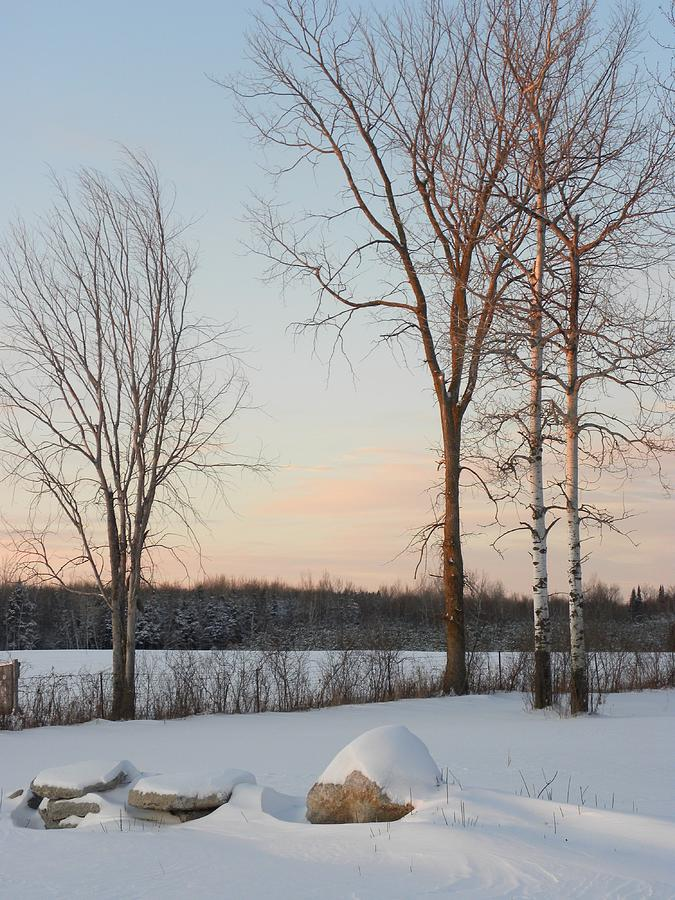 Trees Photograph - Crisp Winter Evening by Peggy  McDonald