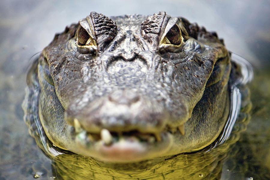 Horizontal Photograph - Crocodile Eyes by Ellen van Bodegom