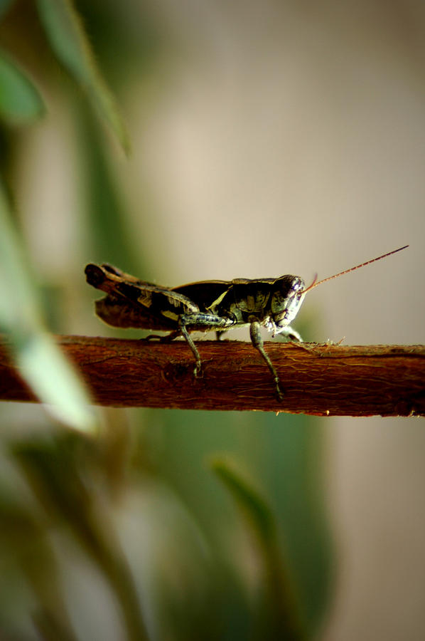 Grasshopper Photograph - Crossing The Ravine by David Weeks