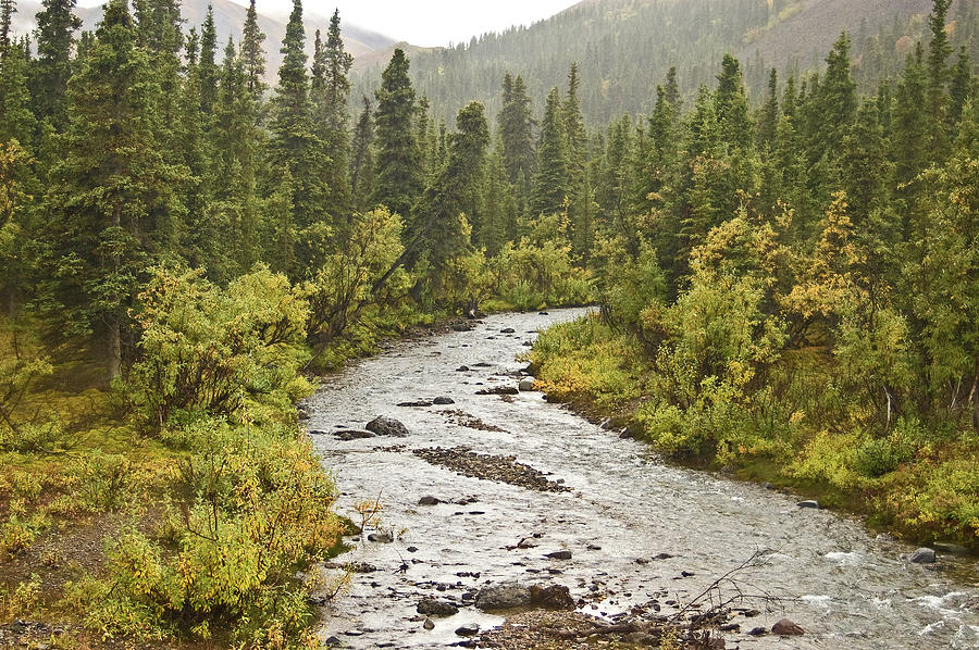 Landscape Photograph - Crossing The Stream In Denali by Jim and Kim Shivers