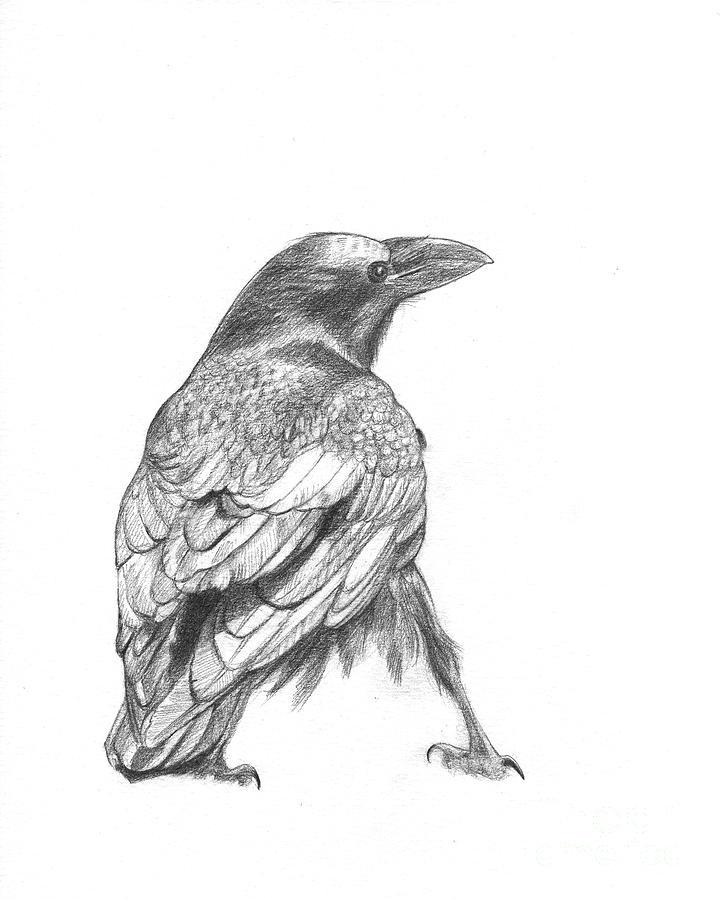 Crow Drawing - Crow by Kazumi Whitemoon