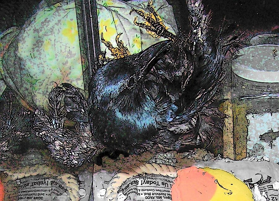Crow Mixed Media - Crow Rehab by YoMamaBird Rhonda