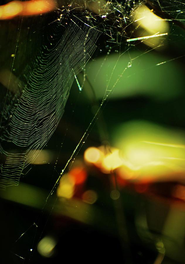 Spiderweb Photograph - Crownd by Rebecca Sherman