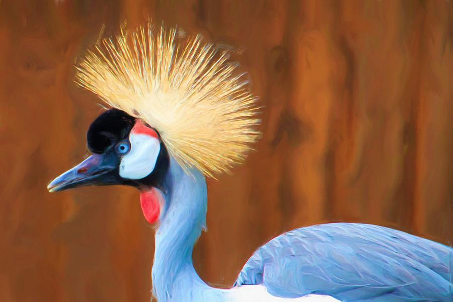 Crowned Crane Photograph By Heidi Smith