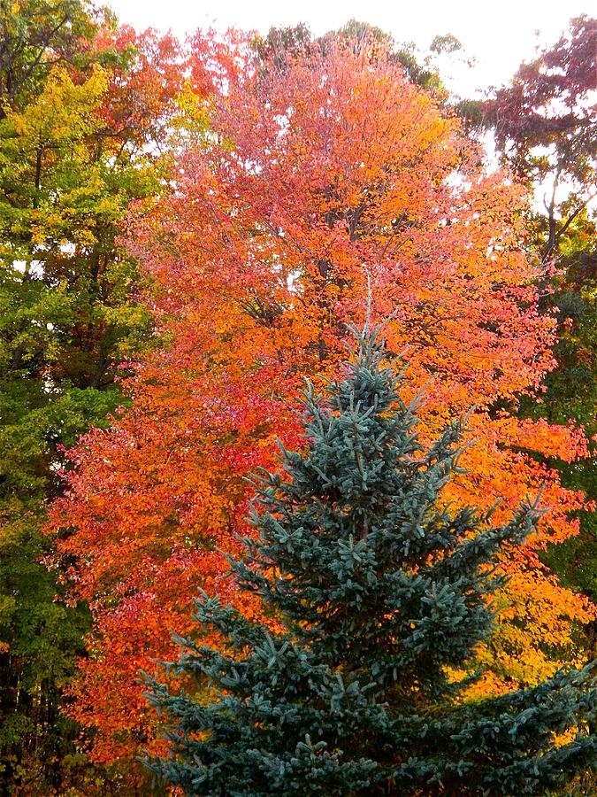 Fall Photograph - Crowning Glory Of Autumn by Randy Rosenberger