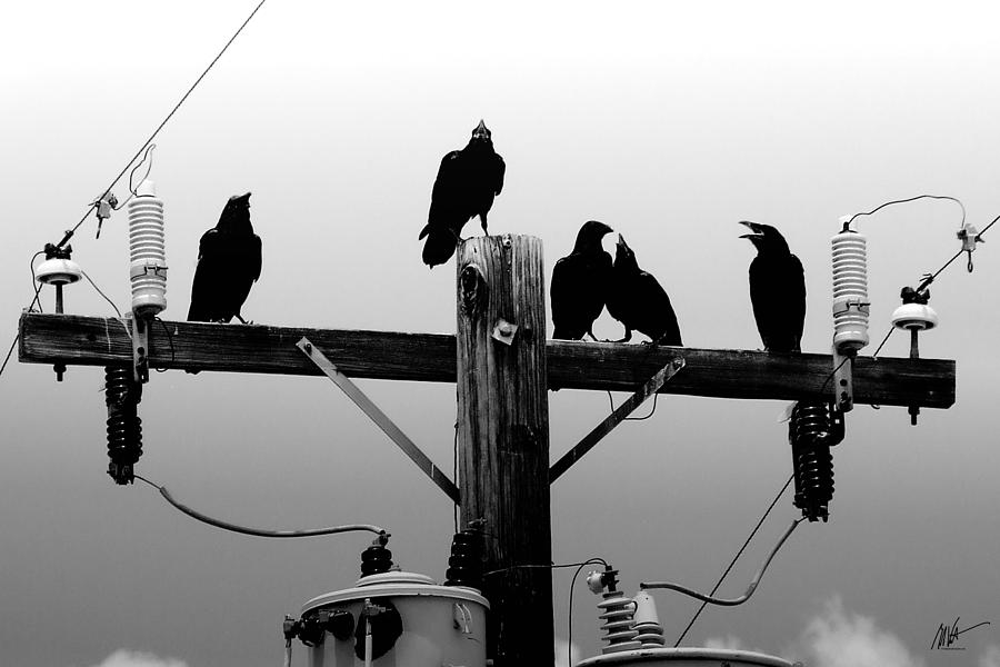 Crows And Insulators On Route 66 Photograph