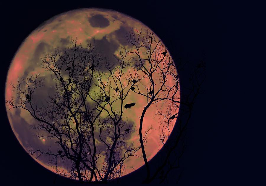Bildergebnis für crows moon