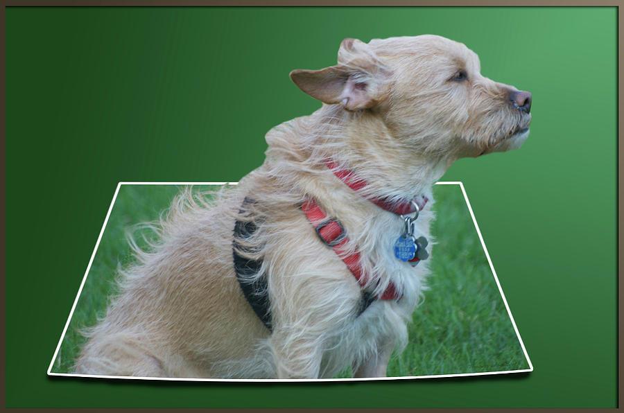 Wind Photograph - Cruz Enjoying A Warm Gentle Breeze 02 by Thomas Woolworth