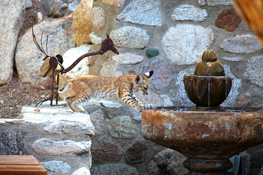 Wildlife Photograph - Cub Gets A Drink by Dan Nelson