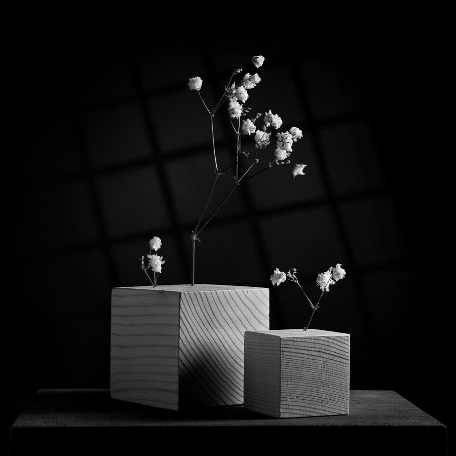 Flowers Photograph - Cubicle Flowers - Gray Variations by Ovidiu Bastea