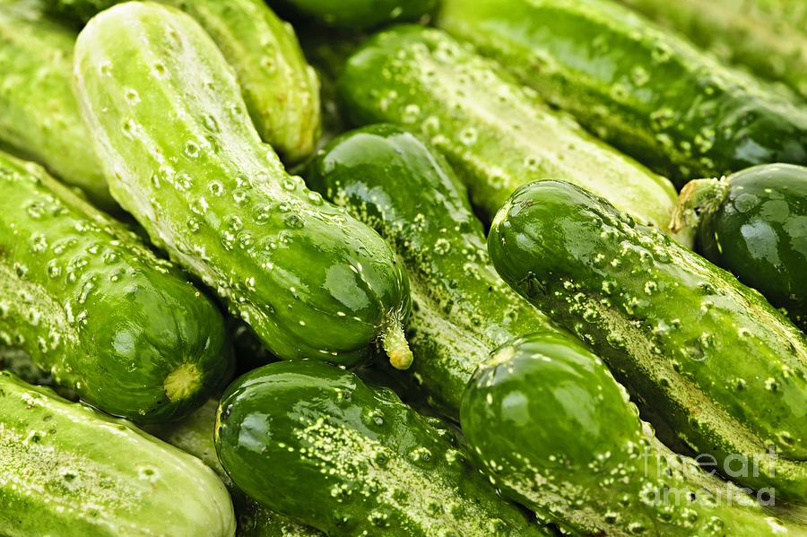 Cucumbers Photograph - Cucumbers  by Elena Elisseeva
