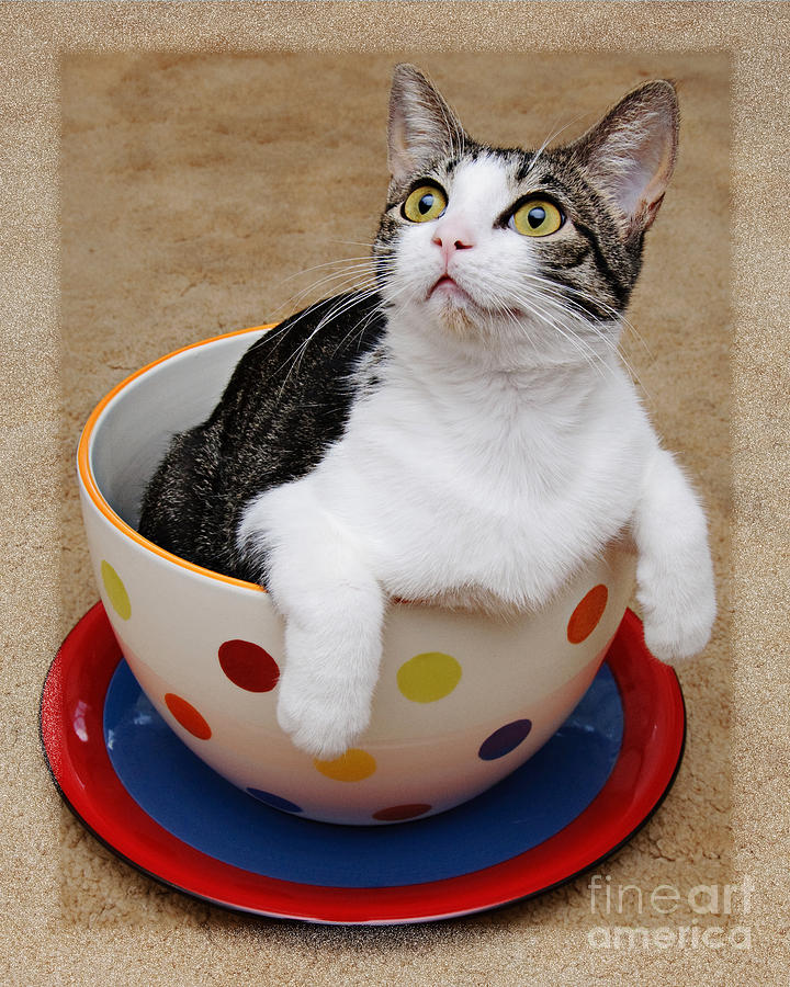 Cat Photograph - Cup O Tilly 2 by Andee Design
