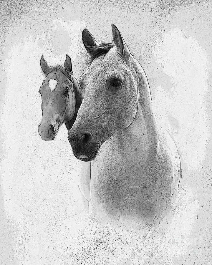 Horse Photograph - Curiosity by Betty LaRue