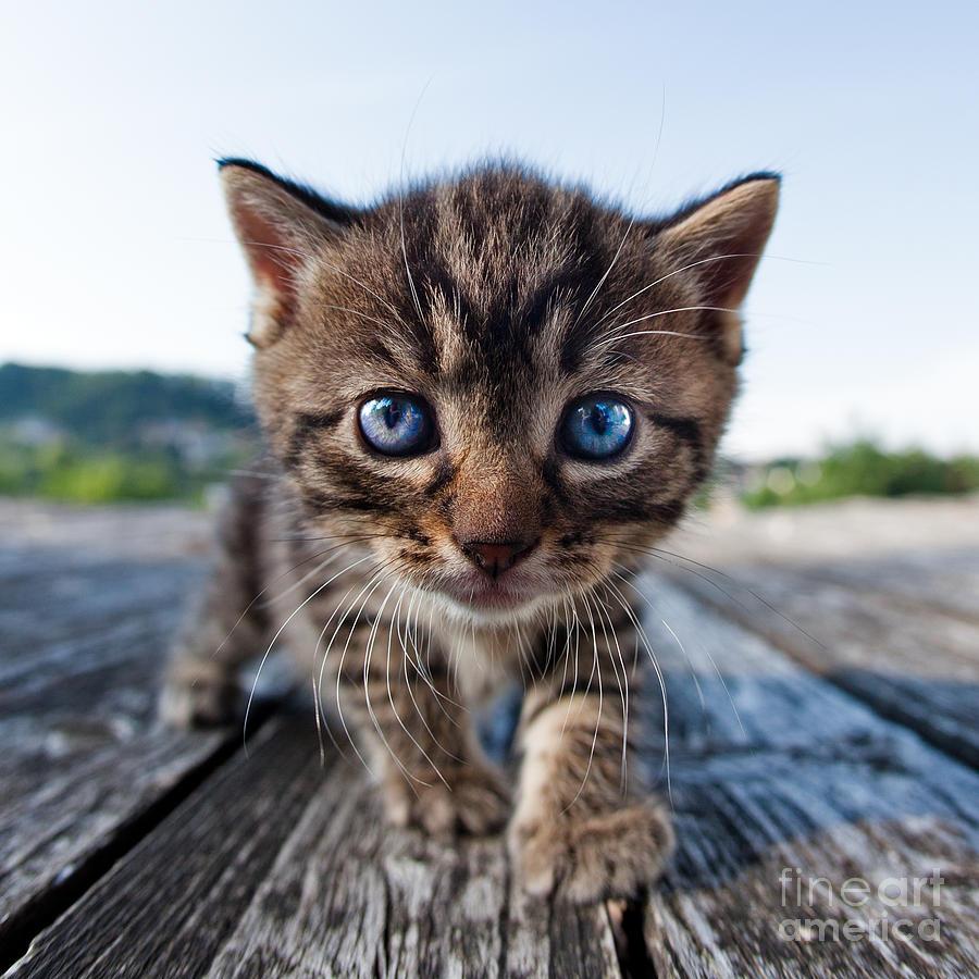 Cat Photograph - Curiosity by Henrik Spranz