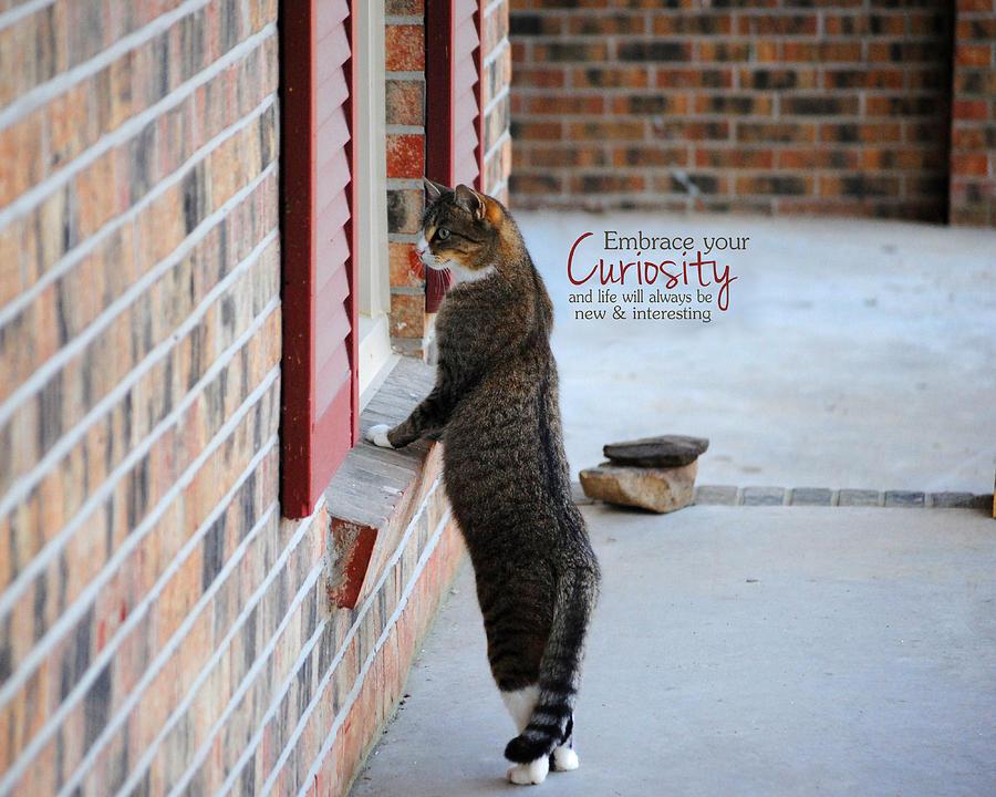 Curious Photograph - Curiosity Inspirational Cat Photograph by Jai Johnson