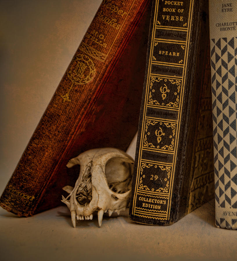 Bone Photograph - Curiosity Killed The Cat by Heather Applegate