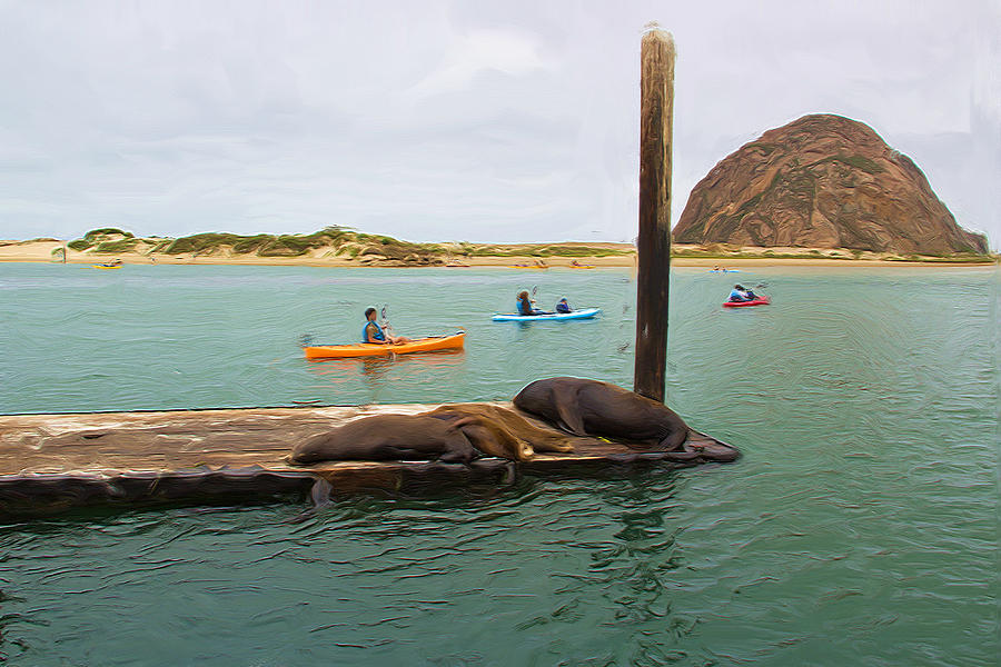 Morro Rock Photograph - Curious About Sea Lions by Heidi Smith