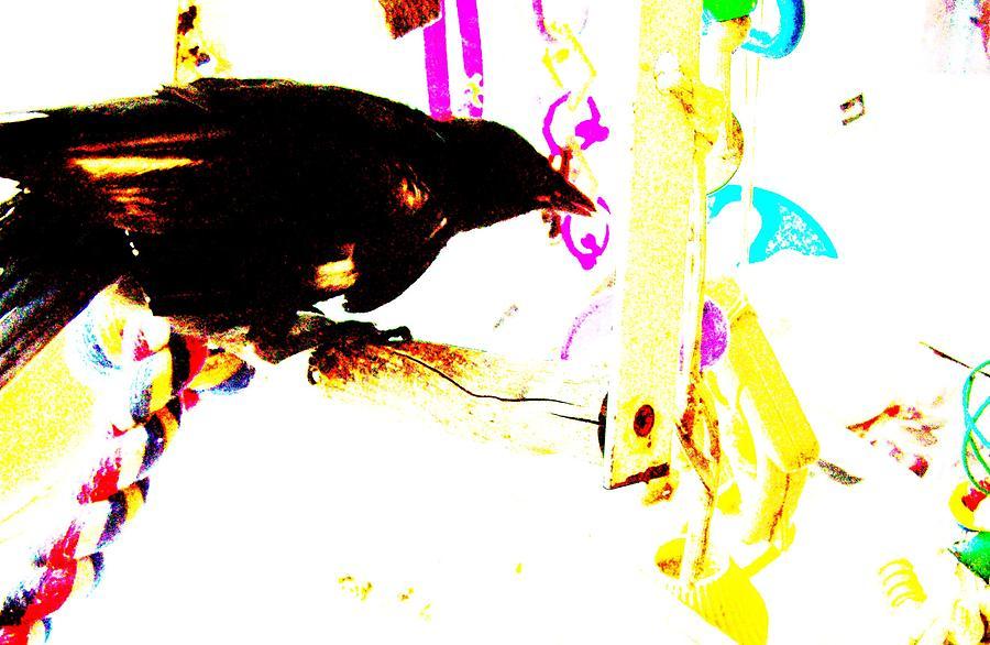 Crow Mixed Media - Curious Crow by YoMamaBird Rhonda