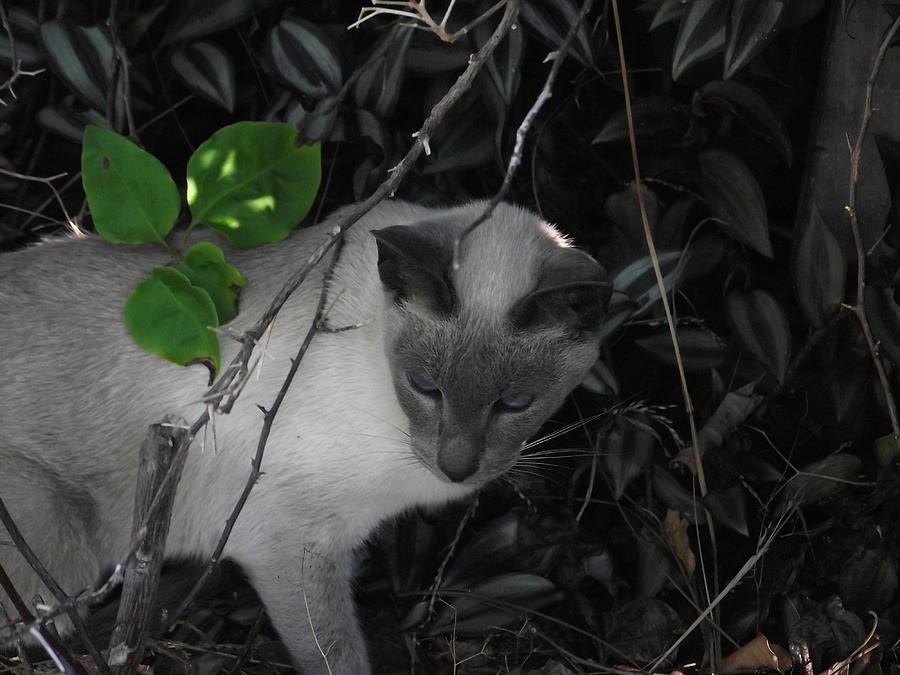 Cat Photograph - Curious Kitty by Rani De Leeuw