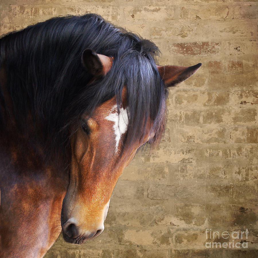 Horse Photograph - Cute Bay Horse With Long Mane by Ethiriel  Photography