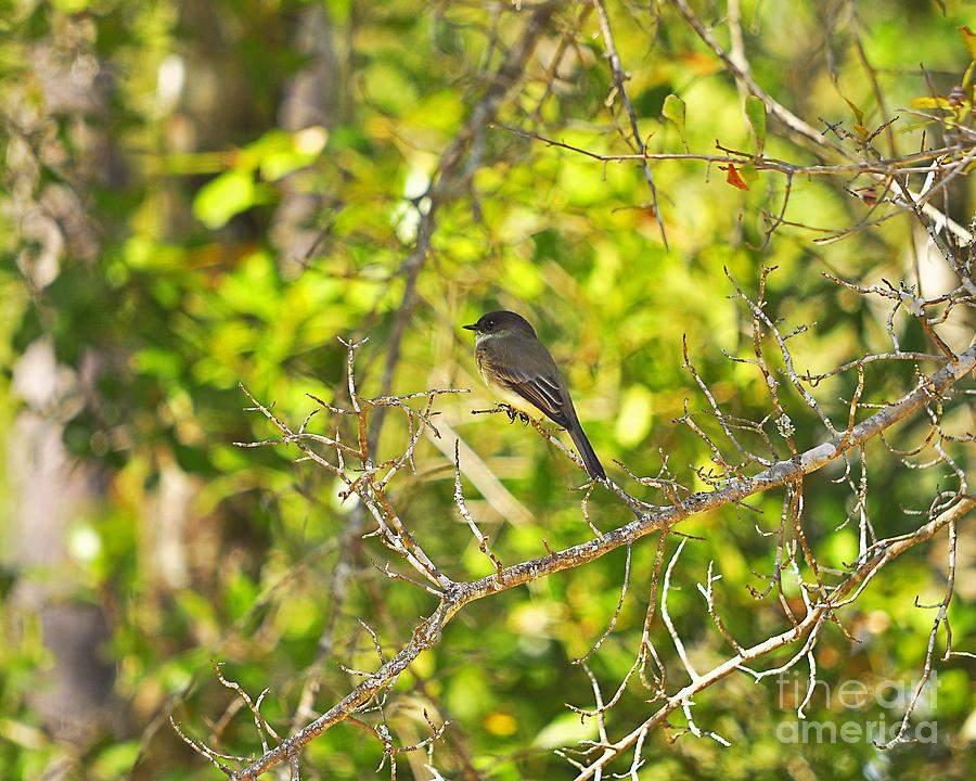 Bird Photograph - Cute Chickadee by Al Powell Photography USA