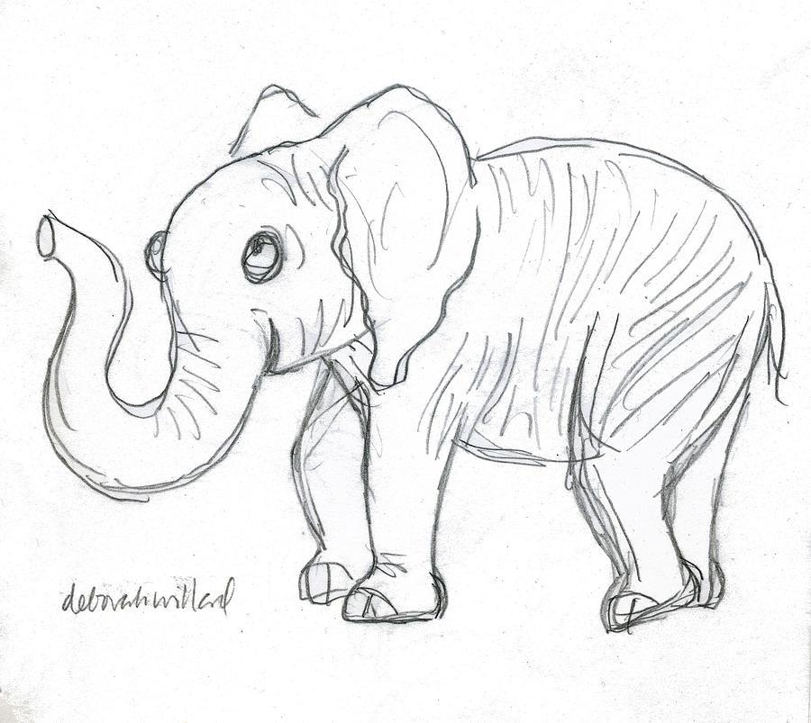 Cute Elephant Drawing By Deborah Willard