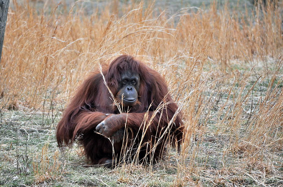 Zoo Photograph - Cute by Tammy Price