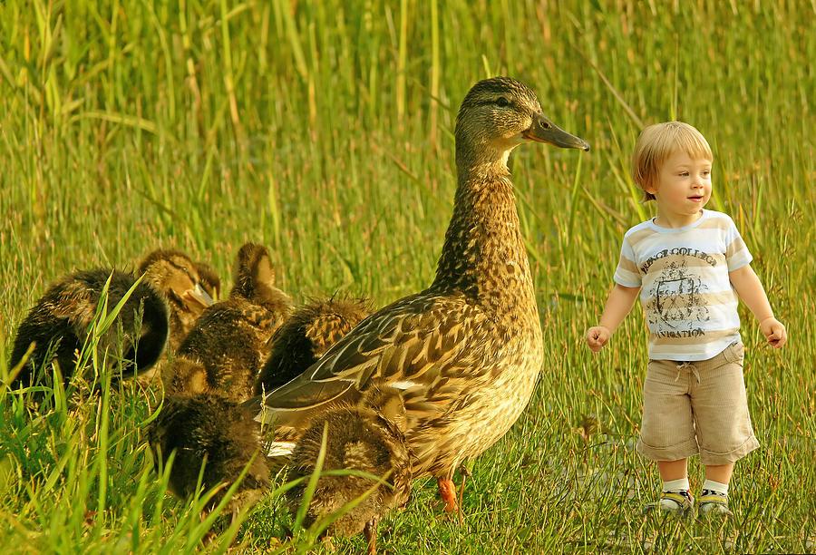 Beautiful Photograph - Cute Tiny Boy Playing With Ducks by Jaroslaw Grudzinski