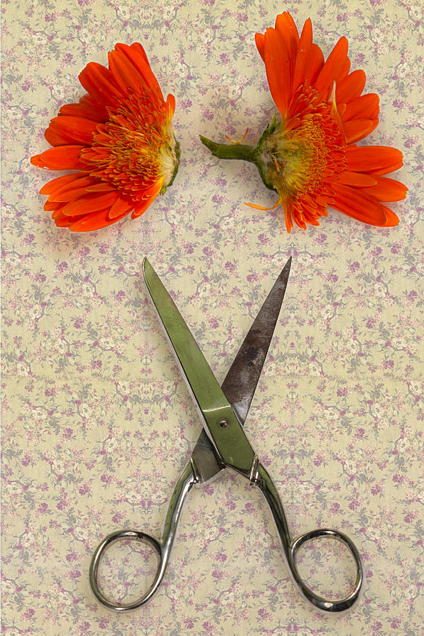 Scissors Photograph - Cutting Flowers by Joana Kruse