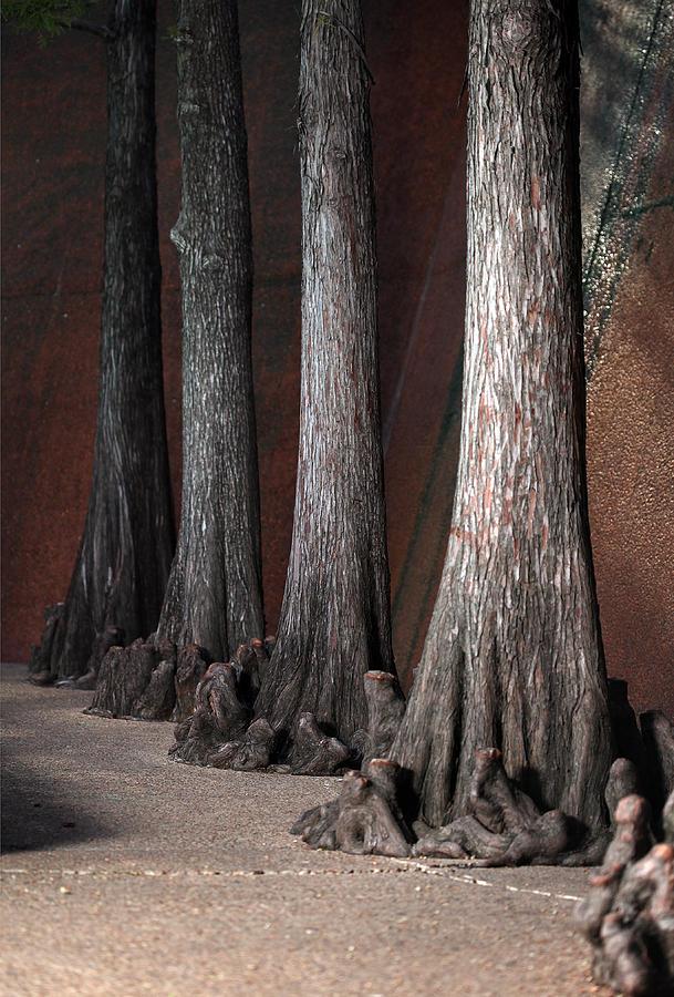 Cypress Photograph - Cypress by Greg Kopriva