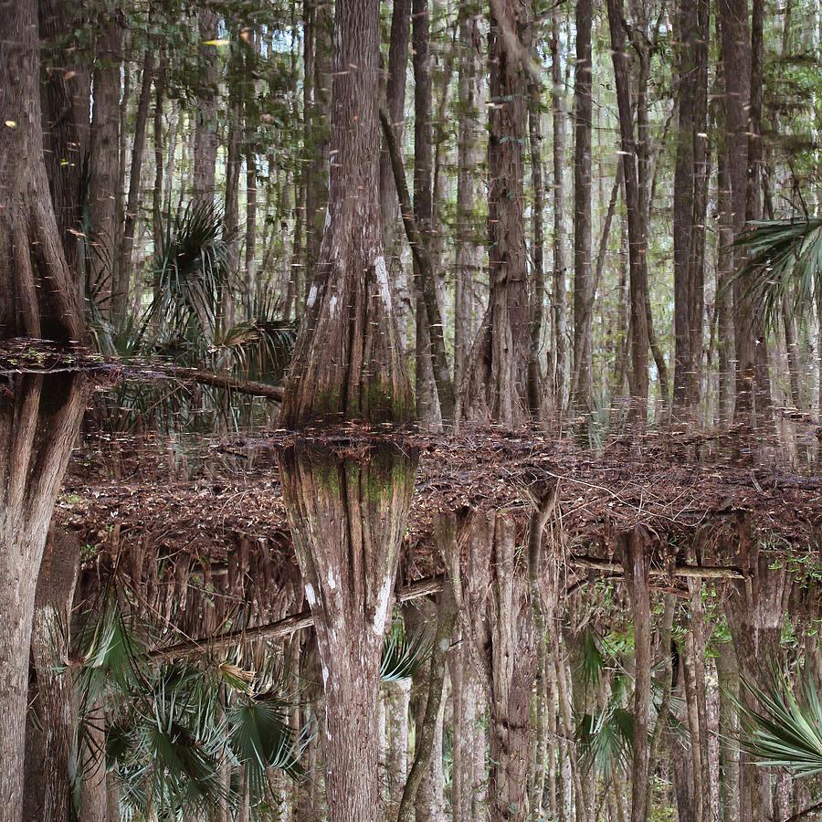 Cypress Photograph - Cypress Hammock by Joseph G Holland