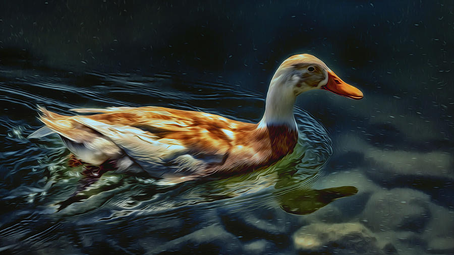 Indian Runner Duck Photograph - Dabbling In Blue Waters by Bill Tiepelman