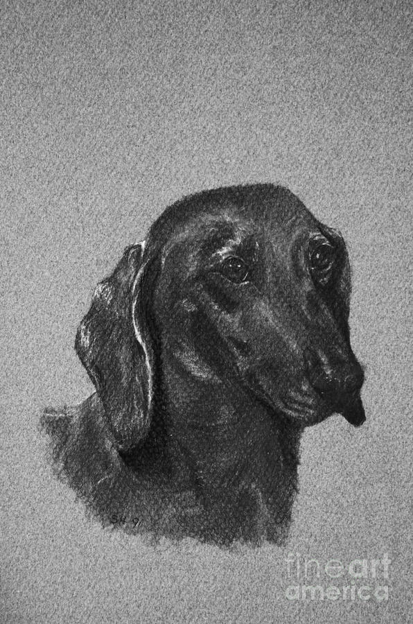 Dog Drawing - Dachshund by Susan Herber