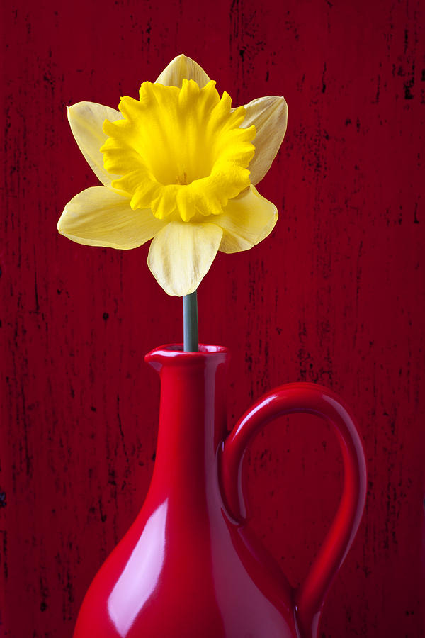 Yellow Photograph - Daffodil In Red Pitcher by Garry Gay