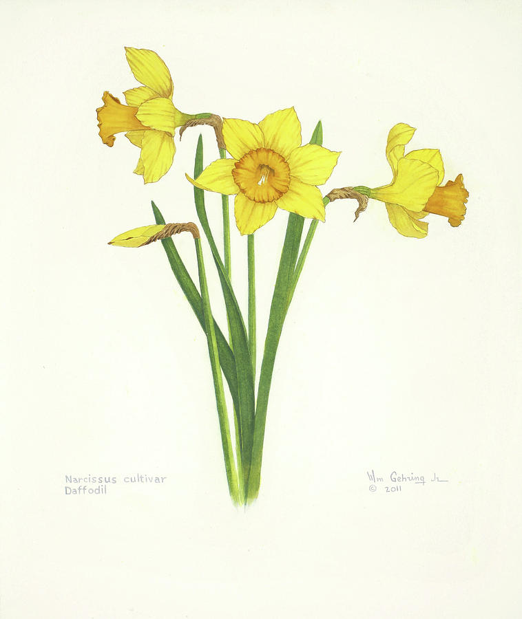 Daffodils Painting - Daffodils by Bill Gehring