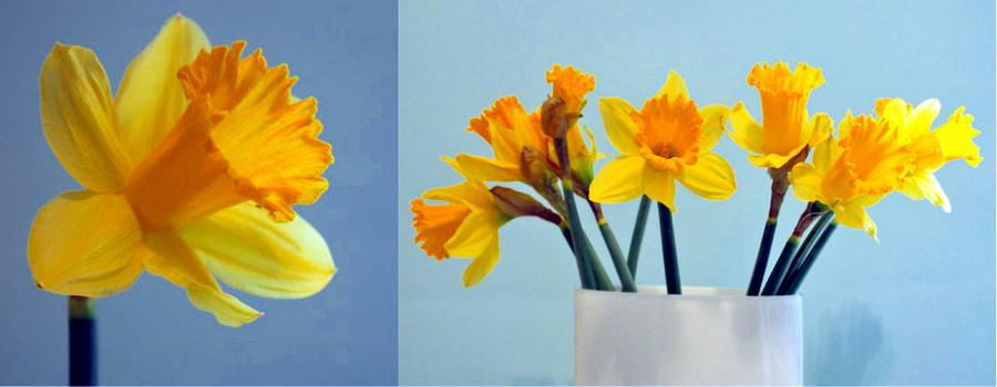 Daffodils Photograph - Daffodils by Cathie Tyler