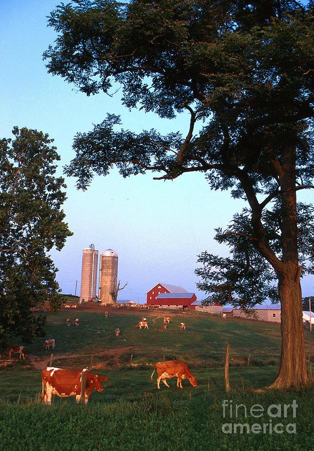 Farm Photograph - Dairy Farm by Photo Researchers