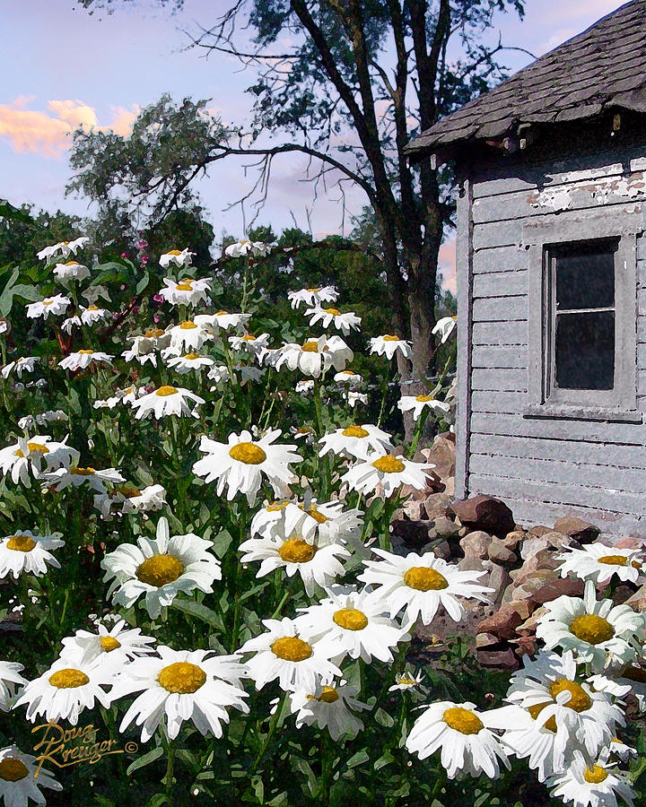 Daisies Painting - Daises Delight II by Doug Kreuger