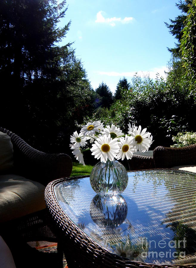 Daisy Photograph - Daisy Bouquet In The Afternoon Light  2 by Tanya  Searcy