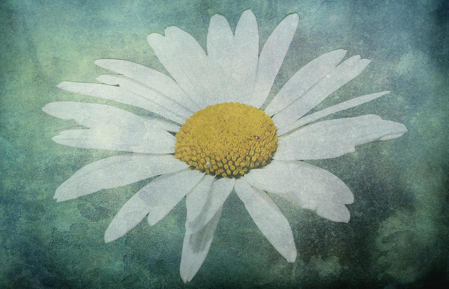 White Flower Photograph - Daisy by Dawn OConnor