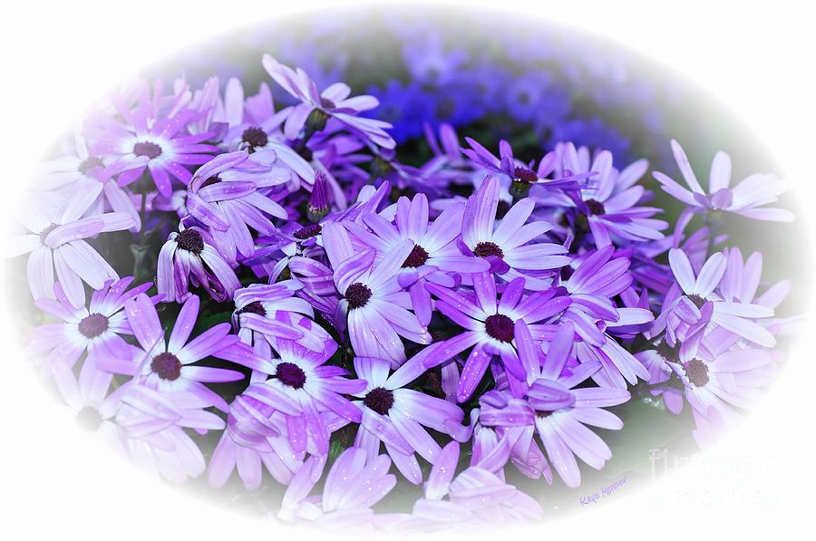 Daisy Garden Photograph - Daisy Garden Vignette by Kaye Menner