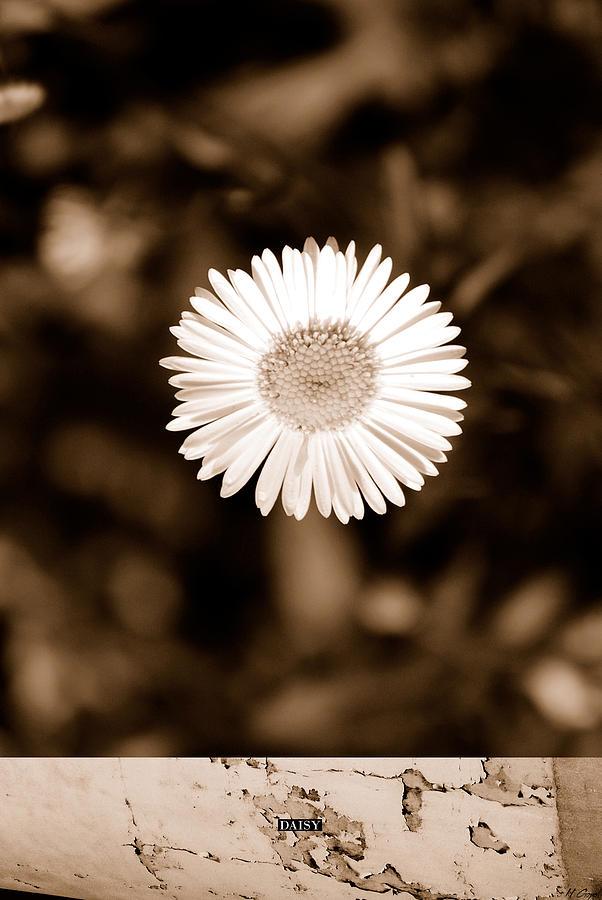 Daisy Photograph - Daisy by Hement Gopal