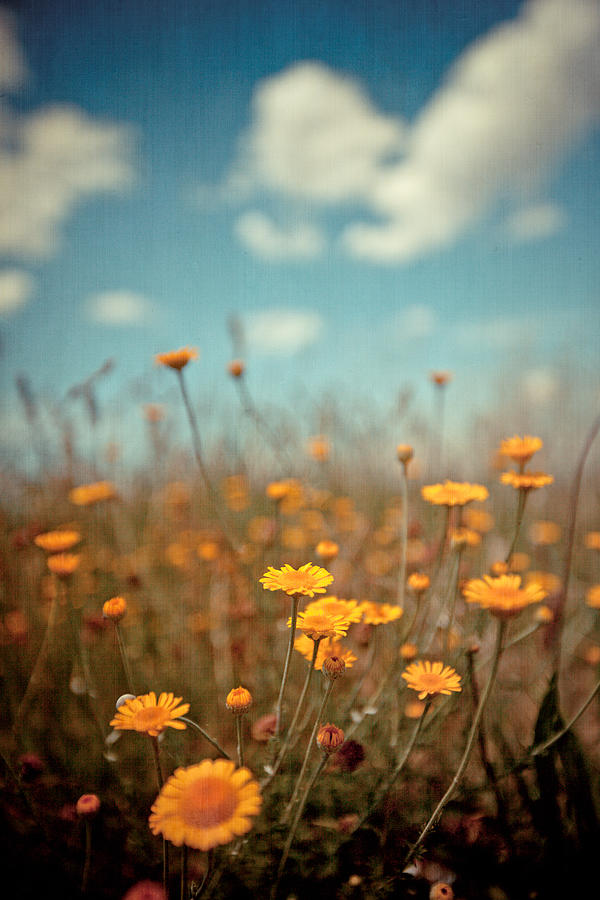 Vertical Photograph - Daisy Meadow by Boston Thek Imagery