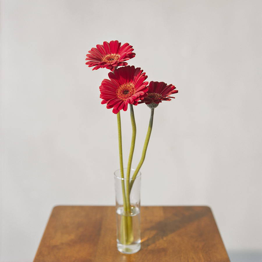 Square Photograph - Daisys On Table by Daniel J. Grenier