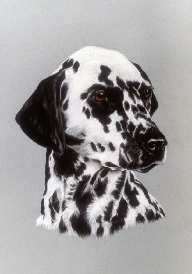 Dog Pastel - Dalmatian by Patricia Ivy
