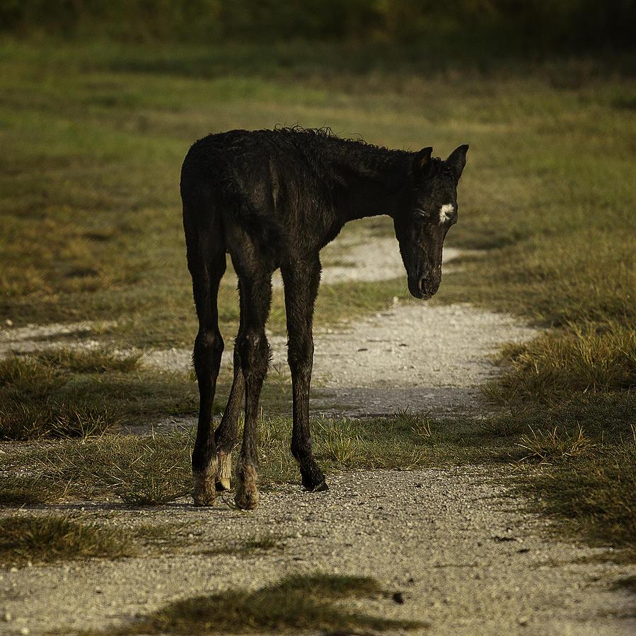Foal Photograph - Damp Cracker Foal by Lynn Palmer