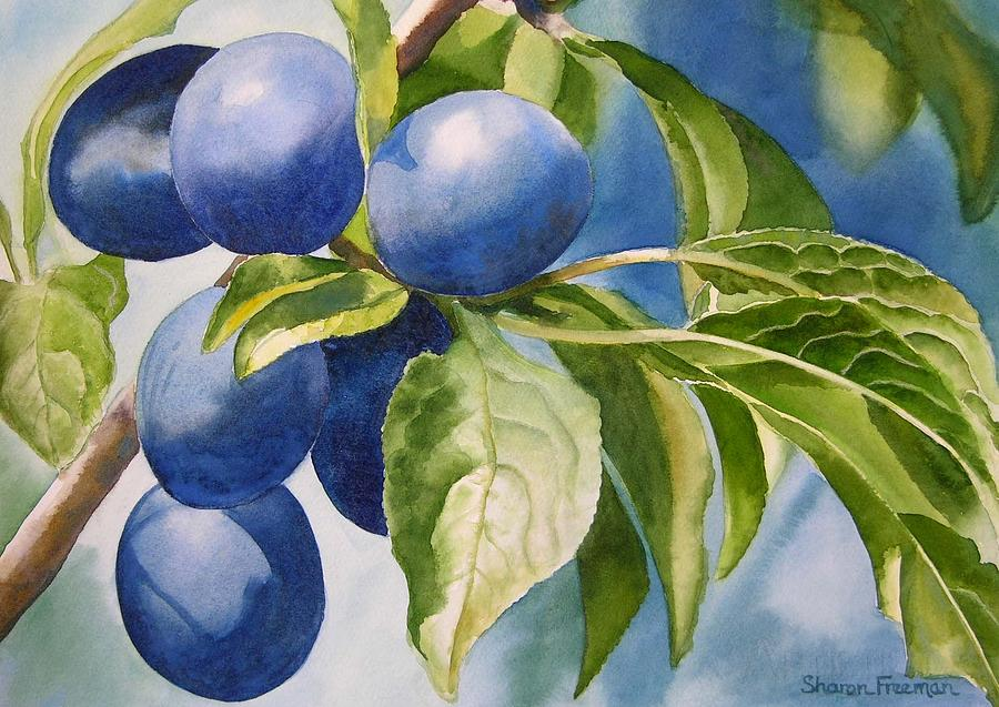 Plums Painting - Damson Plums by Sharon Freeman